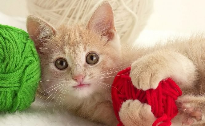 ovillo de lana y gatito