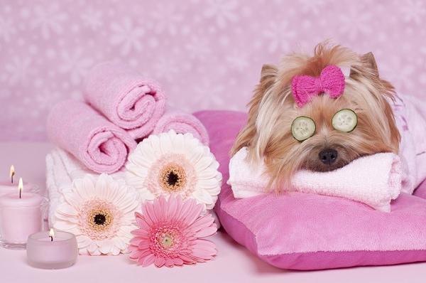 perro belleza_mini