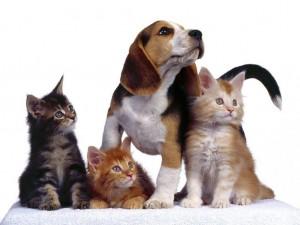 perros-gatos