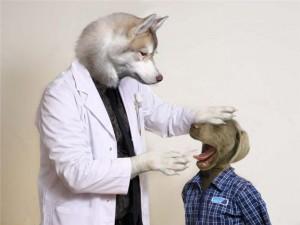 veterinario1